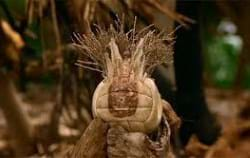 Every Programmer needs a 'Wilson' (from Castaway with Tom Hanks)