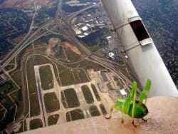 Cricket on arm of man in a plane