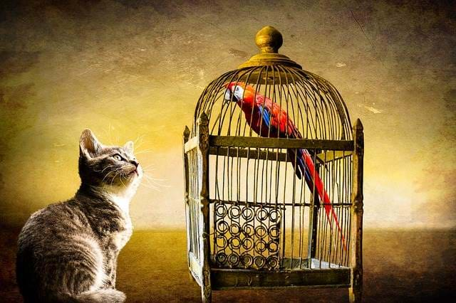 Cat looking at a bird in a cage.