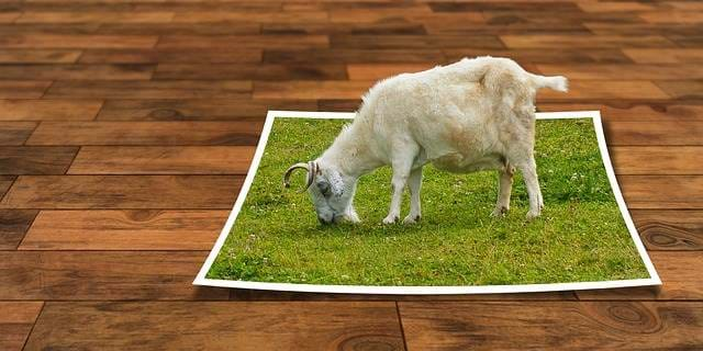 Lamb eating grass from a piece of paper